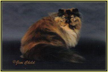 แมวเปอร เซ ย Particolor Division ในป 2021 แมวเปอร เซ ย ส น ข แมว
