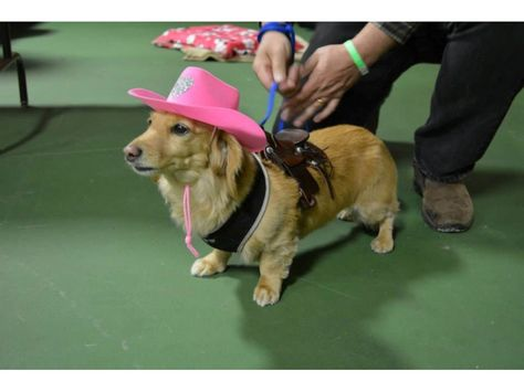 Midwest Dachshund Rescue Fundraiser And Social On June 20 2015 In
