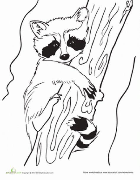 картинки енота для выжигания по дереву