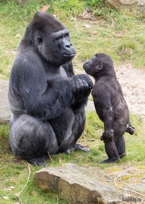 Mommy why can't i go? You're not old enough but everybody else is going  #mommy #Youre      Mommy why can't i go? You're not old enough but everybody else is going #Mutter #und #Kind    Gallery [+25 Ideas]