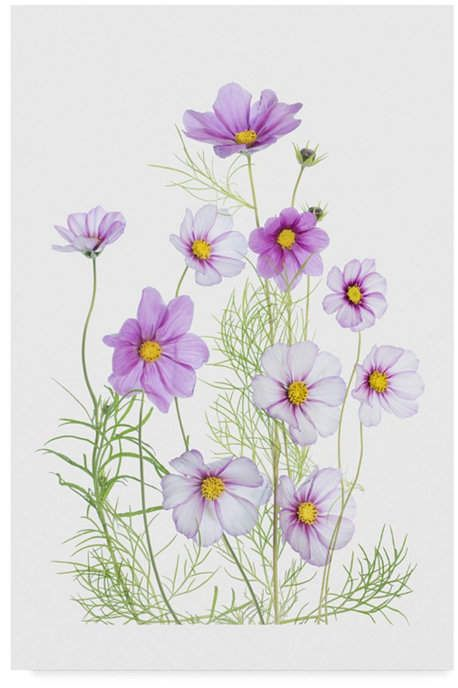 Trademark Global Mandy Disher 'Cosmos Comfort' Canvas Art - 12 x 2 x 19