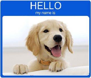 Golden Retriever Names The Best Names For 2016 Choose A Name