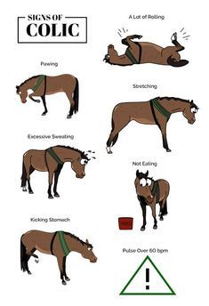 Your Horse's Lumps & Bumps Colic: Detect, Prevent and Learn As horse owners and carers, we are likely to have come across a horse with colic at least once thro… - Art Of Equitation Cute Horses, Pretty Horses, Horse Love, Beautiful Horses, Horse Riding Tips, Horse Tips, Horseback Riding Tips, Horse Behavior, Horse Information