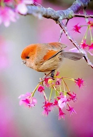 Those Colors Beautiful Bird Wallpaper Beautiful Birds Birds Wallpaper Hd