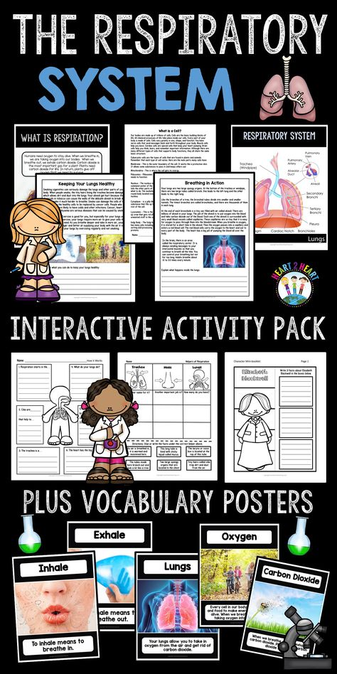 Human Body Systems: Respiratory Systems - Articles & Activities about our Lungs