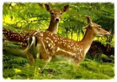Segui la traccia, alla scoperta degli animali dalle loro tracce