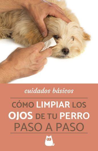 Cmo Limpiar Los Ojos De Mi Perro En 2020 Perros Orina De Perro Pulgas Perros