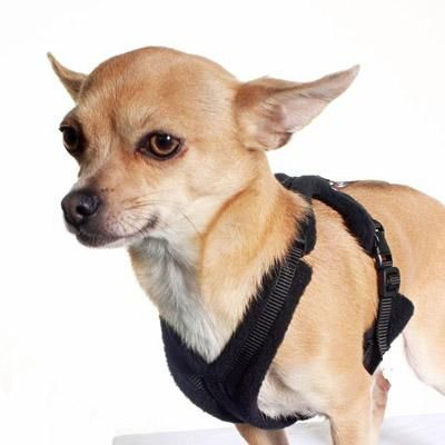 Tiny Perfectfit Harness 3 6 For Chihuahua Puppies 34 40cm Chest