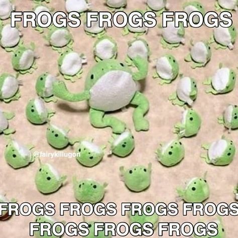 Stupid Funny Memes, Haha Funny, Memes Estúpidos, Frog Art, Cute Frogs, Frog And Toad, Oui Oui, Wholesome Memes, Reaction Pictures