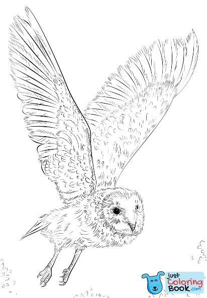 Barn Owl In Flight Coloring Page Free Printable Coloring Pages For Barn Owl Coloring Pages Owls Drawing Owl Coloring Pages Bird Drawings