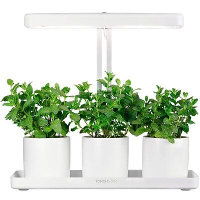 Torchstar Garden Kit Herb And Kitchen Garden Grow Light Wayfair In 2020 Herb Garden In Kitchen Garden Kits Grow Lights