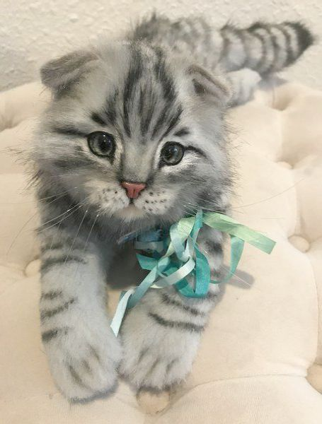 Grandma Knitted Me This I M Not Happy Tabby Kitten Cutest Kittens Ever Baby Animals Funny