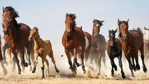 I M Going To Speak My Mind Because I Have Nothing To Lose Animals Horses Goats