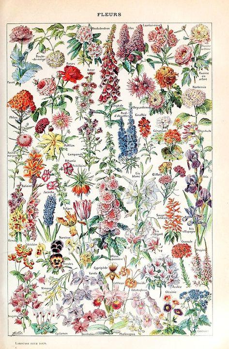 Adolphe Millot - Fleurs pour tous - French vintage poster