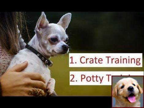 1 Have Dog Behavior Problems Learn About What Is House Training A