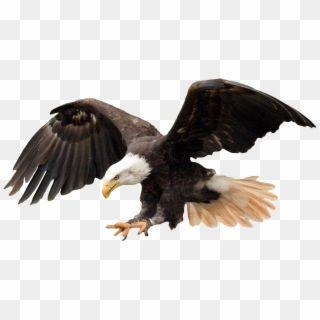 Bald Eagle Png Travis Scott Off White Transparent Png Travis Scott Bald Eagle Eagle