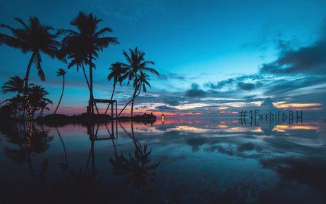 Fresh 4k Nature Wallpaper Coucher De Soleil Fond D Ecran Palmier Palmiers