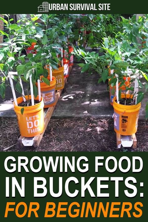 Growing Food in Buckets: A Step by Step Guide | Urban Survival Site