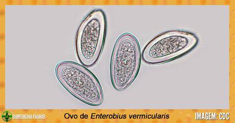 Enterobius vermicularis - generalitati, analize medicale recomandate | Bioclinica