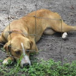 Inverness Fl Hound Unknown Type Meet Stray Broken Arrow Avail 7 16 19 Fire Station A Pet For Adoption Pet Adoption Dog Adoption Dog Pounds