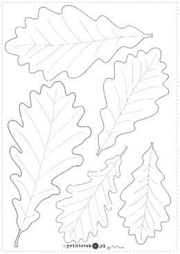 Liscie Debu Material Zawiera Dwie Karty Pierwsza Z Obrysami Lisci Do Wydrukowania Na Kolorowych Kartkach Lub Pokolorowania Druga Z Handmade Polka Rooster
