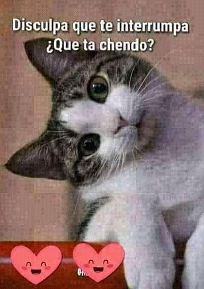 Pin De Norma Palacios En Cuadritos Que Ta Chendo Buenos Dias Perros Buenos Dias Con Gatos