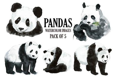Petit Panda Clipart Clipart Aquarelle Animaux Digital Par