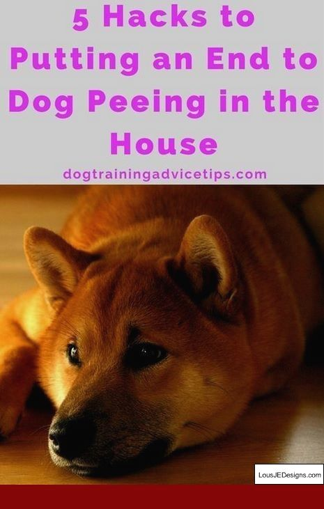 How To Train A Dog To Stay Off Couch And Pics Of Dog Training Tips