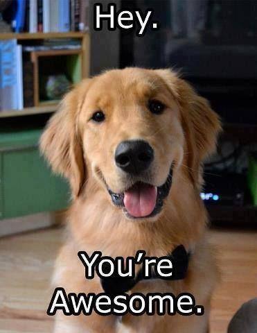 Awesome Golden Retriever Golden Retriever Retriever Puppy