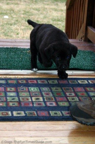 Reader Question How Do You Stop A Dog From Peeing On The Carpet