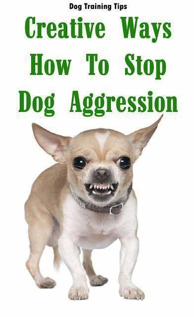 Creative Ways How To Stop Dog Aggression Dog Dog Training