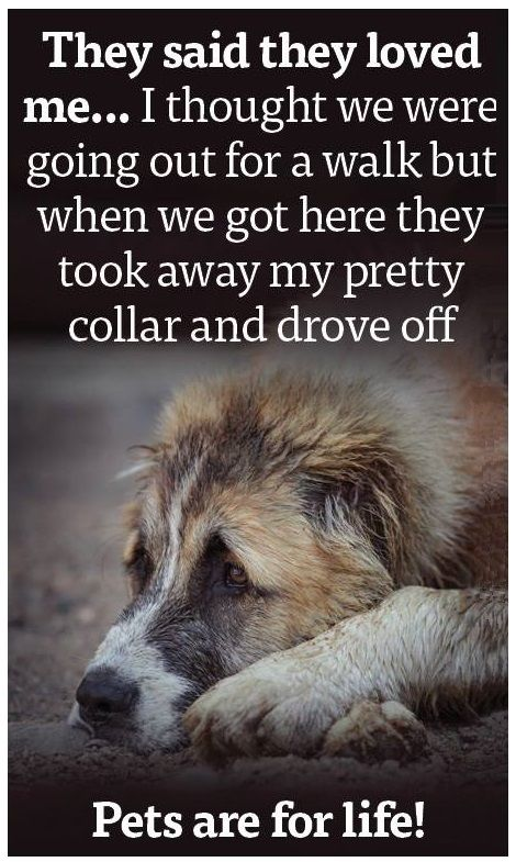 Free Dog Quotes Love Loyalty Compassion Paw Prints A Voice Dog Quotes Dog Quotes Love Dog Shots