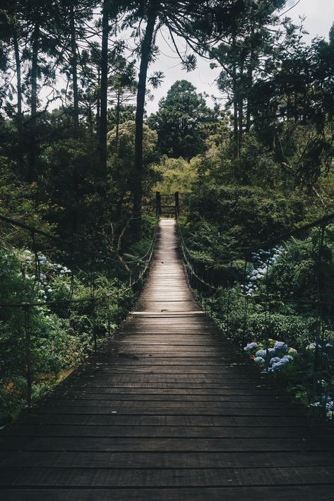 black-hanging-bridge-surrounded-by-green-forest-trees