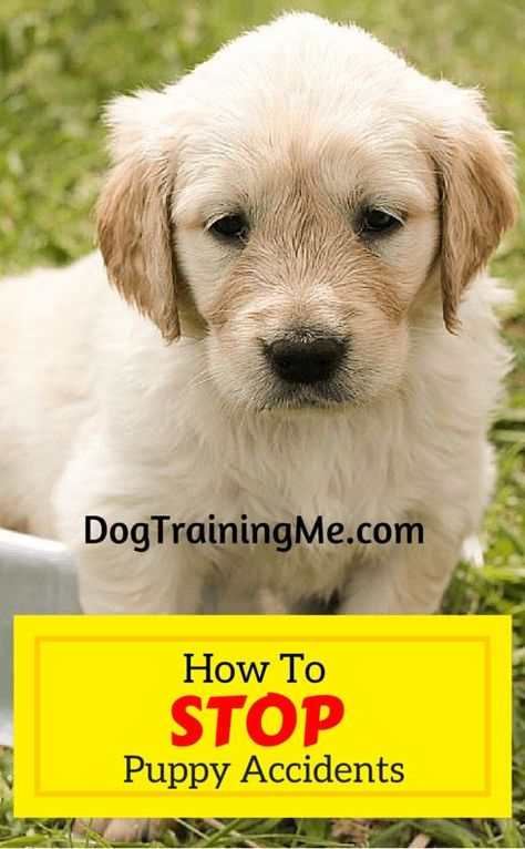 How To Stop Puppy Accidents Training Your Puppy Potty Training Puppy Puppy Training