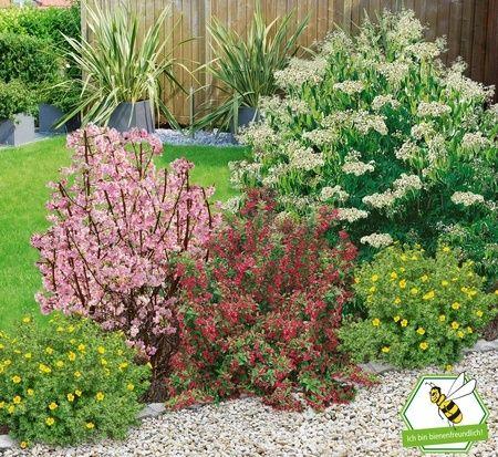 Mein Schoner Garten Bienenfreundliche Hecke Im Set 5 Pflanzen Vorgarten Pflanzen Pflanzen Bienenfreundliche Pflanzen