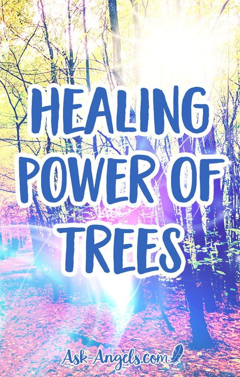 Healing Power of Trees. Trees carry powerful healing abilities and soul wisdom. Learn how to tap into the spiritual and healing power of trees for yourself in this new post! #healing #soulwisdom