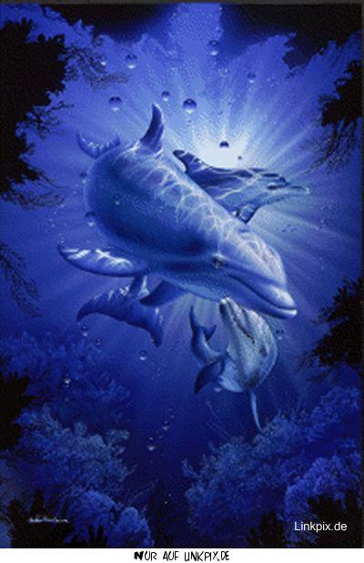 gbpics delfin blau wasserbild  unterwasser tiere bilder