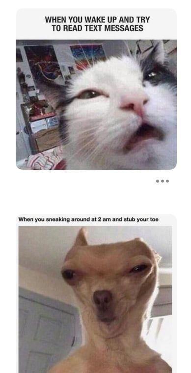 Aaahhh In 2020 Funny Animal Jokes Funny Dog Memes Funny Cat Memes