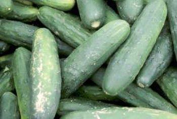 Gurken Schneiden Cucumberasian Cucumberavocado Cucumberbread Cucumbercocktail Cucumbercreamcheese Cucumbercreamy Cucumberdill Gurke Schneiden Garten