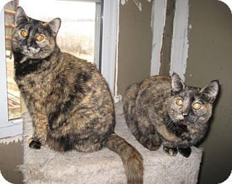 Available For Adoption Belinda And Taloosa Is A Female Cat Tortoiseshell Located At Save A Mutt Kennel Va In Ararat Va Pet Adoption Animals Cats