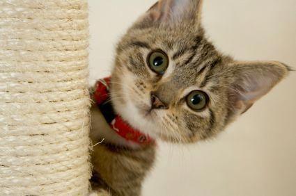 Pet Care Videos Quotes Petinsurancecost Totensonntagzitate Kittens Feline Leukemia Pet Insurance Cost