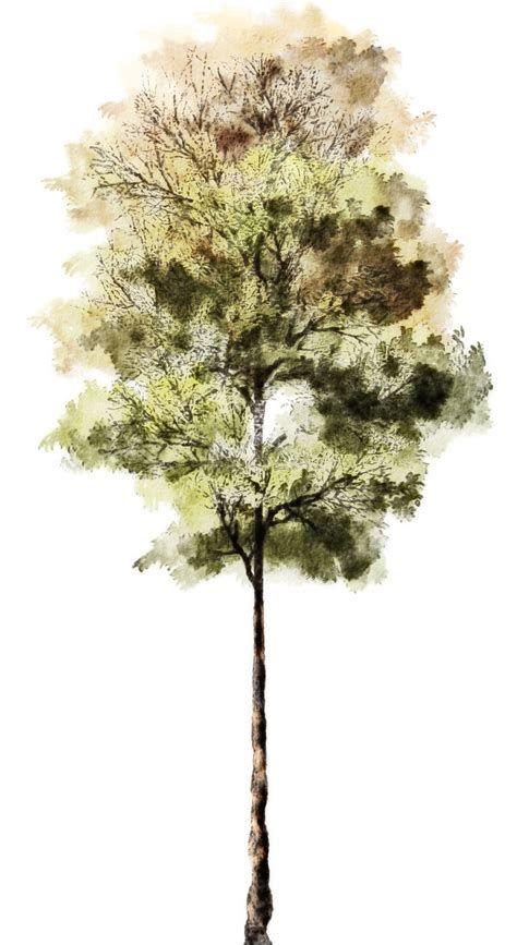 Watercolor Trees Ecosia Bocetos De Arboles