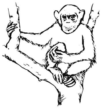 Chimpanzee Coloring Pages To Go With Our Disney Movie