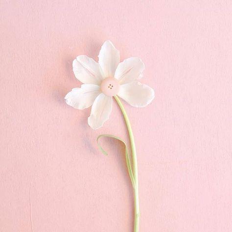 رمزيات رمزيات دينية رمزيات إسلامية صور تصاميم تصميم فوتو ورد مصاحف قرآن القرآن مصحف أزهار وردة جرافيك مصمم مص Pastel Pallete Flowers Instagram