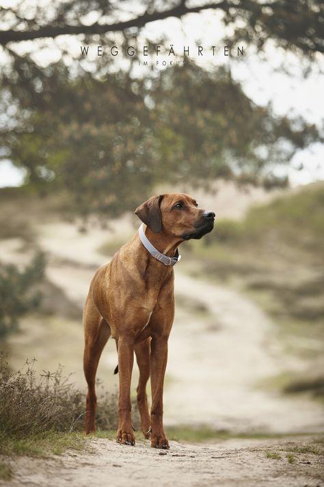 Blue Rain Tierheim Hunde Hunde Beliebte Hunderassen