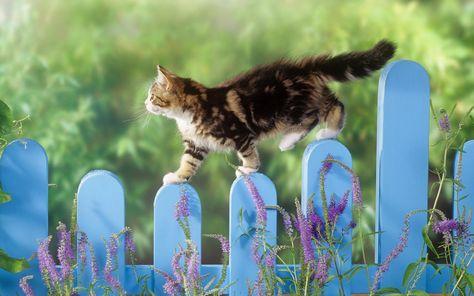 gatto sul recinto
