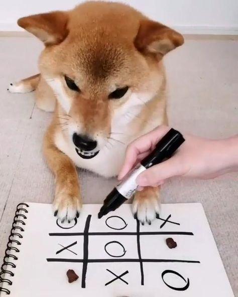 Ta te ti ...gano el perro jajaja Ta te ti ... the dog won hahaha