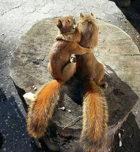 22 Squirrels That Are So Animated You Would Think They Were Human - I Can Has Cheezburger?
