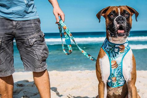Summer Inspired Collars And Leashes From Zee Dog Dog Milk Collar And Leash Modern Dog