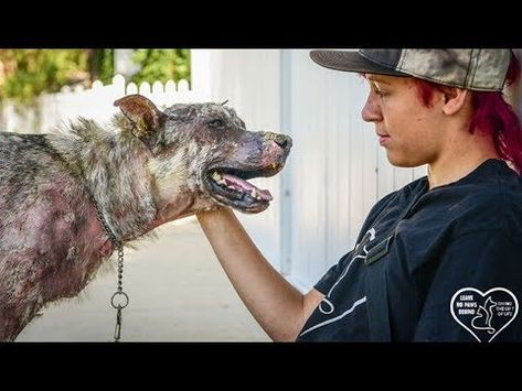 Dog Rescue Stories Bald Dog Lost All His Fur Waiting For Loved Youtube Dog Rescue Stories Rescue Dogs Rescue Stories